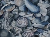 shells-i